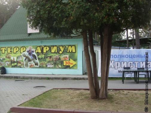 Общественно-политический вернисаж-2011