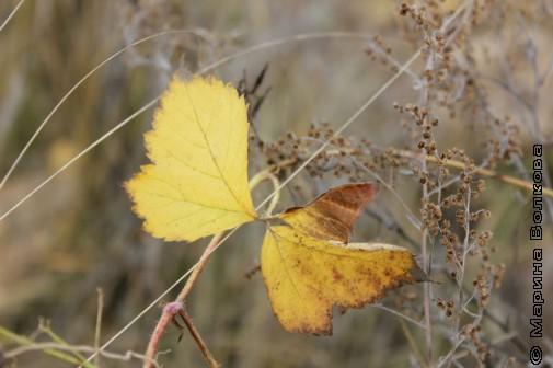 Баландинская осень