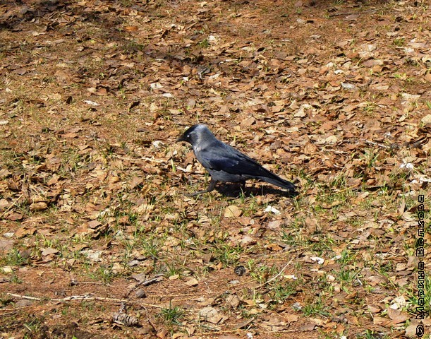 осенняя птица