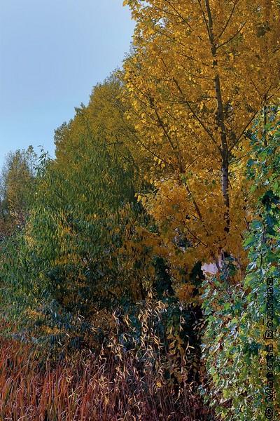 Осень Михаила Придворова
