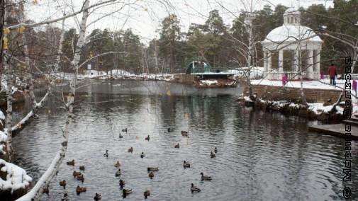 Утки зимуют в парке Гагарина