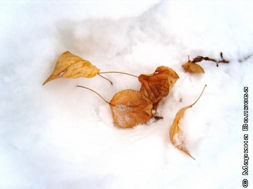 Ноябрь Ирины Аргутиной