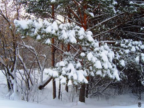 Январь Ирины Аргутиной