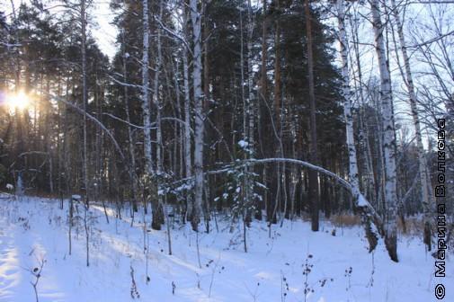 Щедрая зима 2012