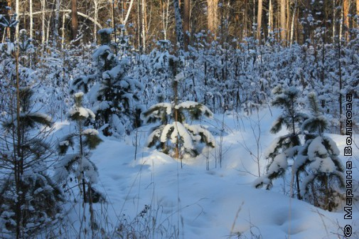 Парк имени Гагарина зимой