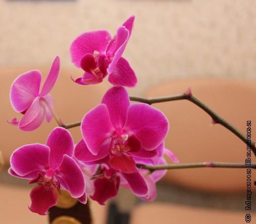 Ещё орхидеи