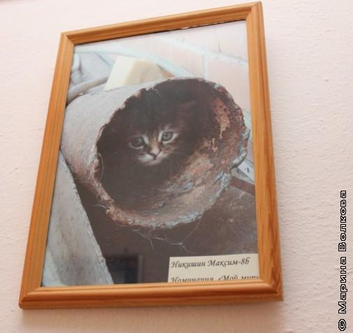 Даже кот на фото гимназиста - Диоген!