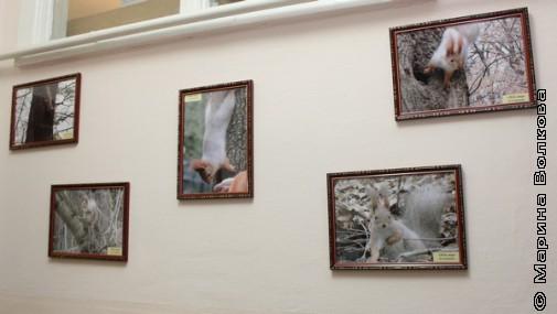 Фотоработы директора тоже украшают стены гимназии