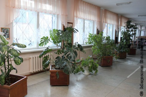 Цветы в рекреации (еще смотреть шторы, пол и цвет стен)