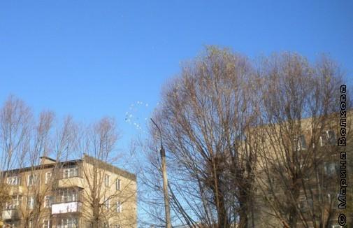 В небе Челябинска голуби выложили сердце