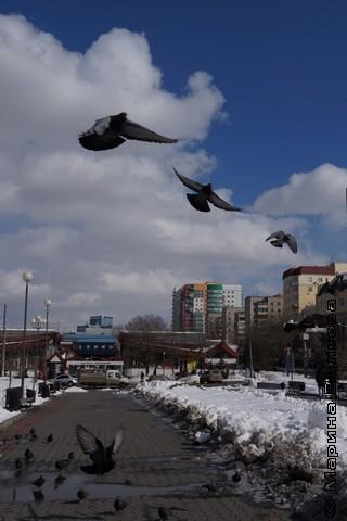 Челябинские голуби