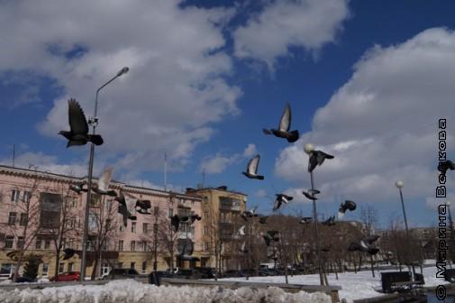 Суровые челябинские голуби живут везде и всегда