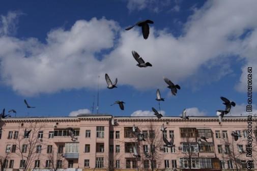 Птицы в Челябинске