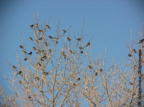 Птичий сериал