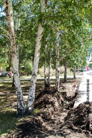 В Челябинске убивают деревья