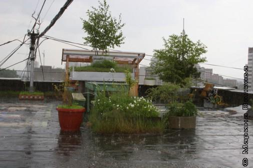 Лето: дождь на крыше