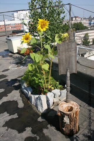 Каждой крыше - по саду!