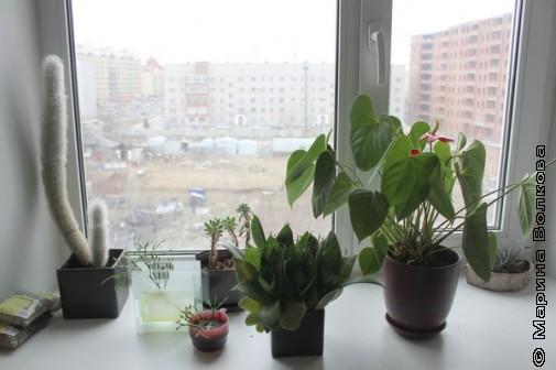 Сургутские цветы