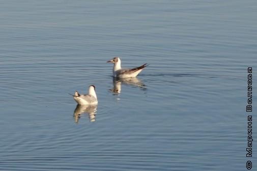 прогулки по берегу озера Смолино