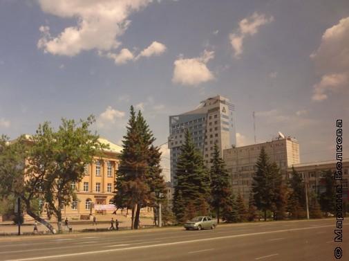 10 елей вдоль пр. Ленина сохнут, их заасфальтировали
