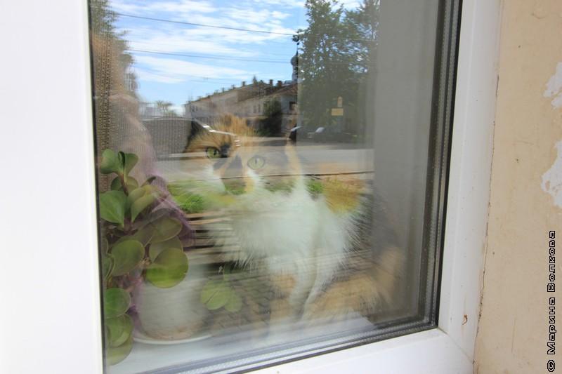 Ростовская кошка в окошке