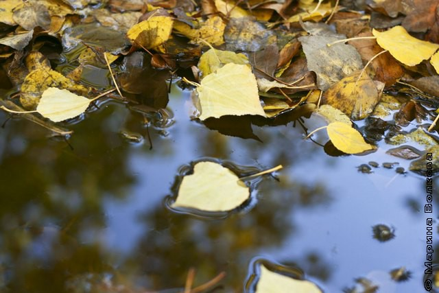 Осень в луже