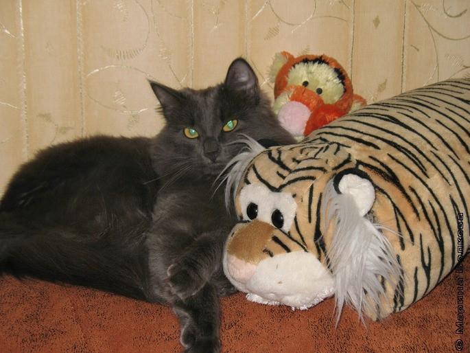 А это библиотекарская кошка - кошка Светланы Худяковой