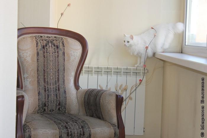 Дуся проверяет готовность съемочной площадки