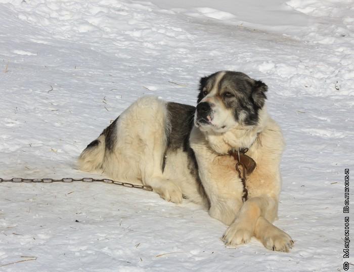 Мартовский пес