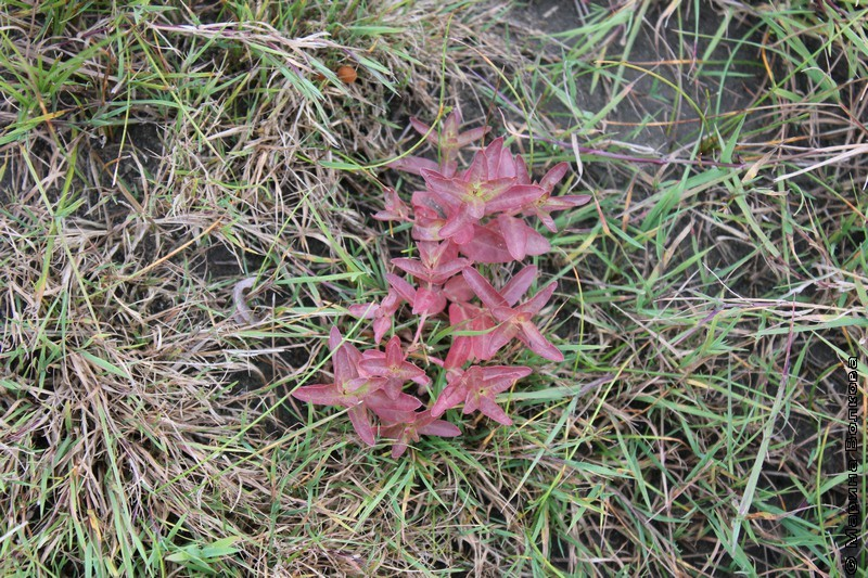 Растения, под Магнитогорском