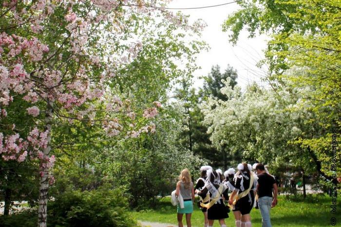 Дорога в бело-розовых цветах