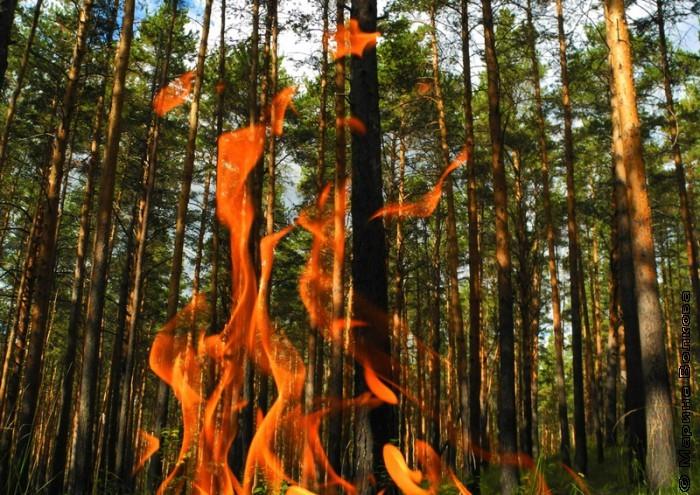 Огонь и лес
