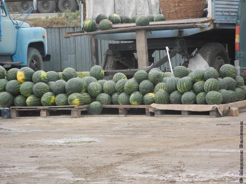 арбузный рынок