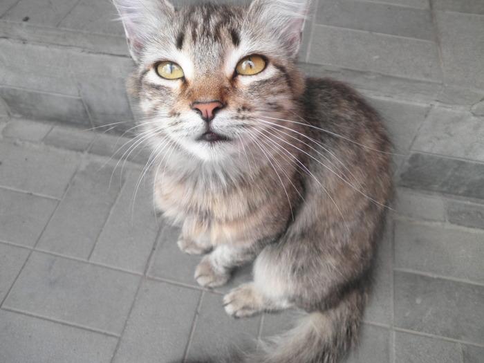 1 марта – Всемирный день кошек