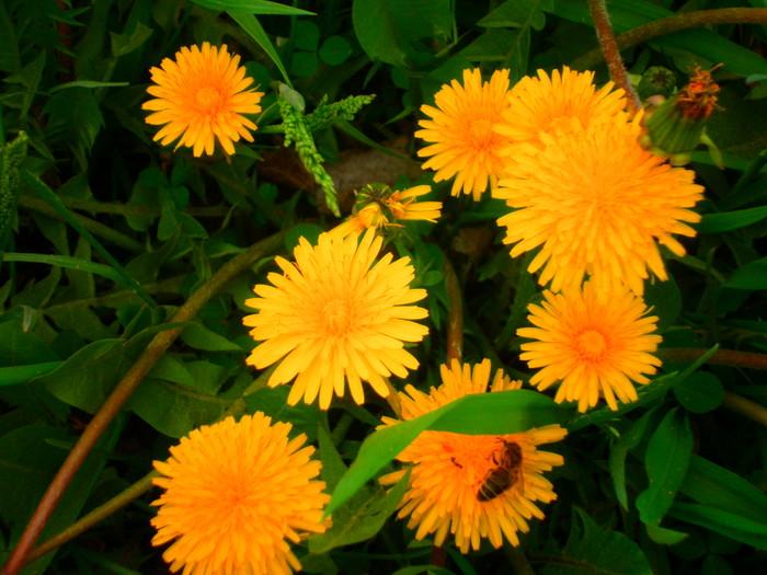 Цветы, влюблённые в ветер