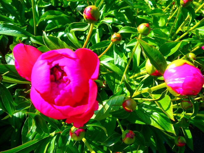 Июнь-разноцвет