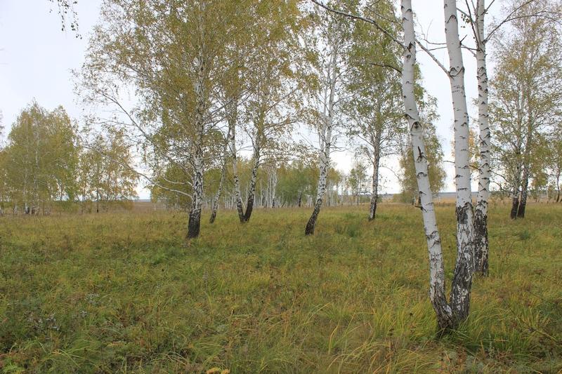 Карстровые поля вокруг села Красносёлка Увельского района