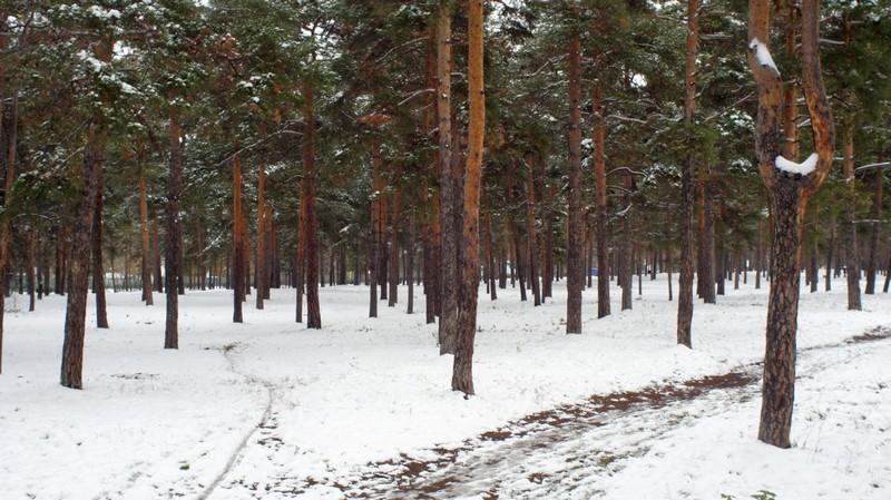Первый снег в парке Гагарина