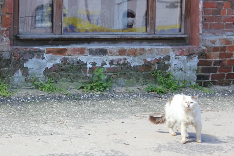 Боевой гороховецкий кот