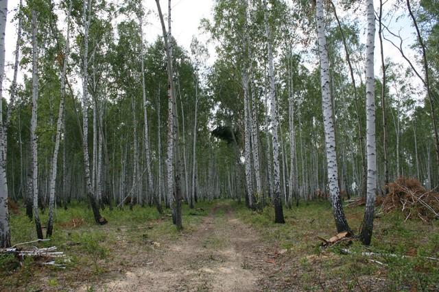 Лес у озера Мыльное