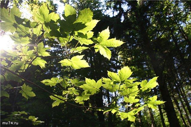 Чешский лес