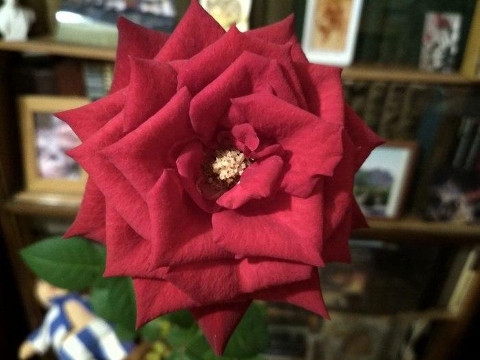 Цветы Ирины Аргутиной