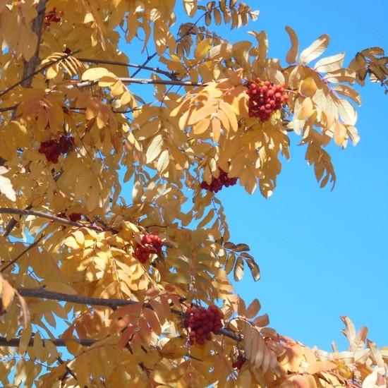 Осень – озорница