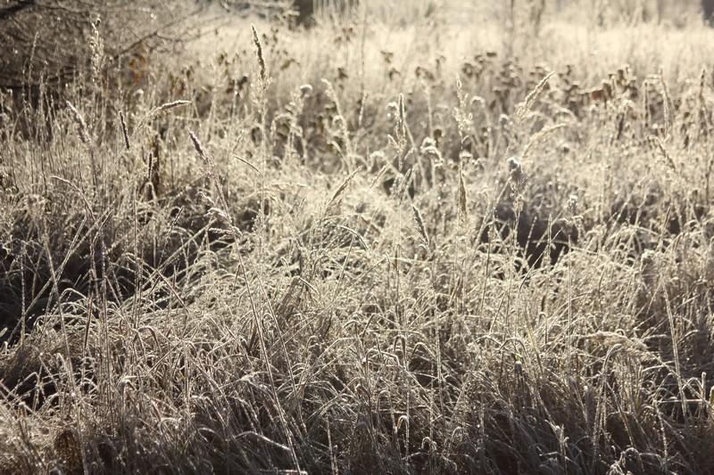 Тавда, следы Серебряного копытца