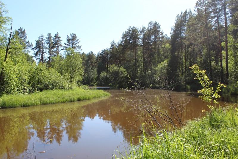 Просто лес у речки в июне